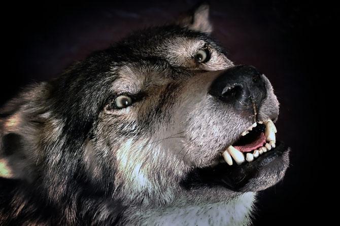 ulv01