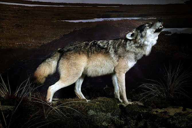 ulv11