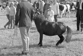 dyrskue1967_08