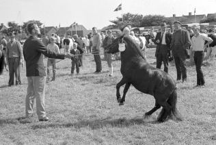 dyrskue1967_07